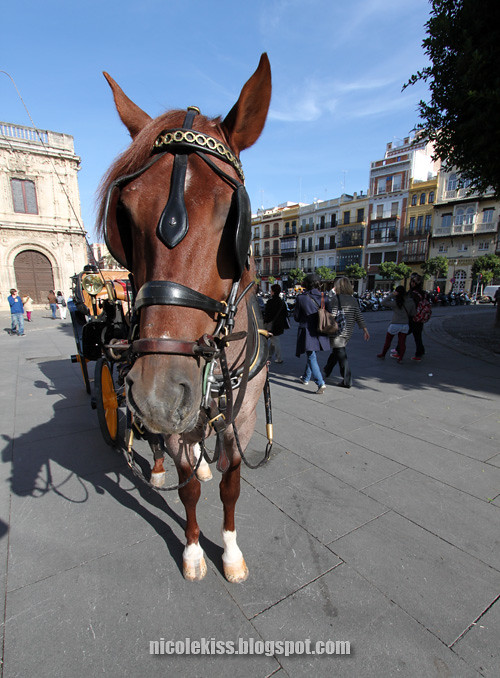 horse in seville