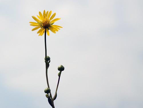 Wildflower at Deer Run