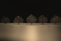 Fake Plastic Trees (T-K-D) Tags: light sepia focus dryleaves hws weekendshowcase decomposingleaves