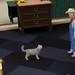 Pets 30