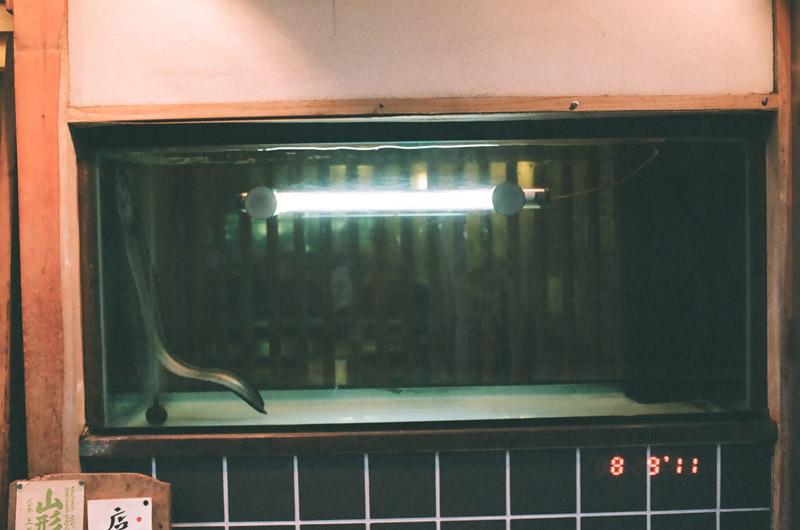 eel (7 of 11)