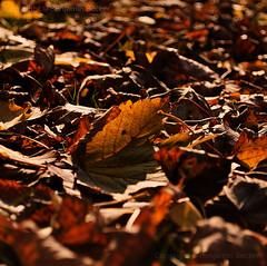 DSC_1356 (BenjaminBe) Tags: autumn berlin germany deutschland nikon herbst 1855 vr afs 3556 d80