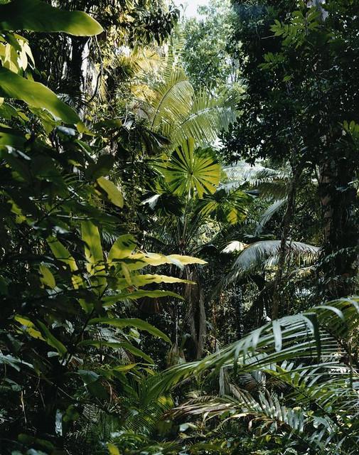 Thomas Struth's 'Paradise'
