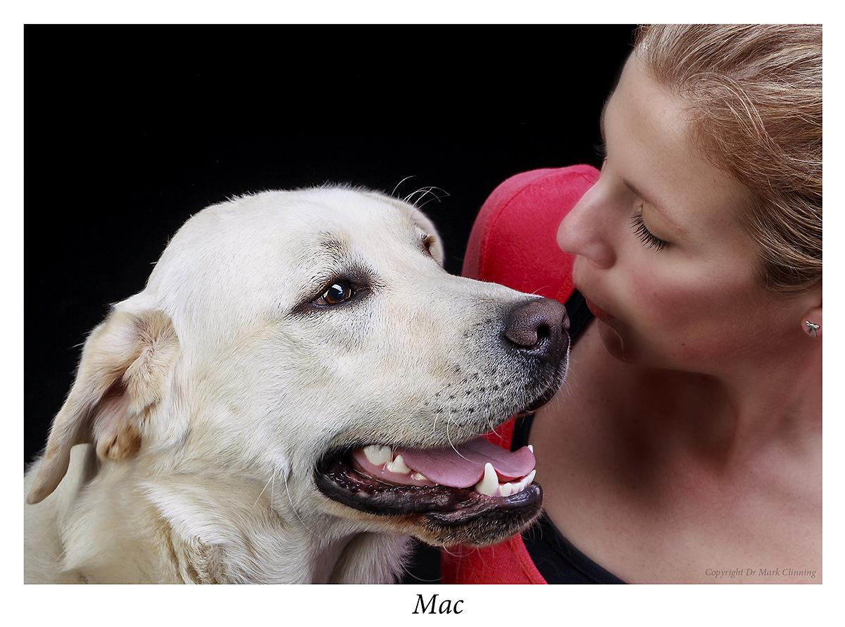 Pics for Labrador Calendar