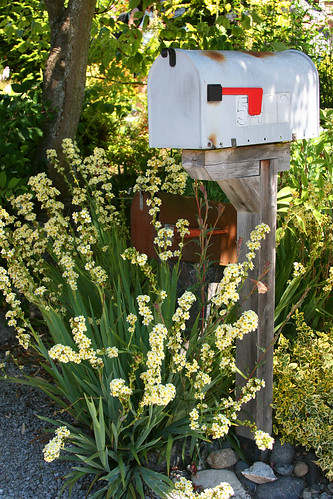mailbox plantings