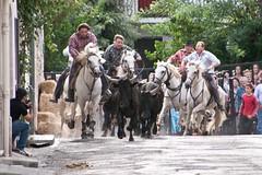 Courses, abrivados, encierros, roussatailles... site fotos 6090222620_2b338cb545_m