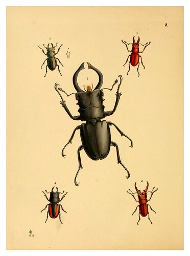 003-The cabinet of oriental entomology…1848- John Obadiah Westwood