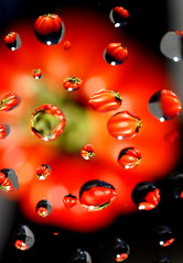 Red water refraction (Andy Coe) Tags: light red black flower colour macro reflection water yellow fruit drops sony bubbles vegetable refraction drips alpha tomatoe a700