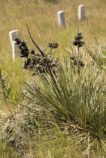 365.8 Little Bighorn