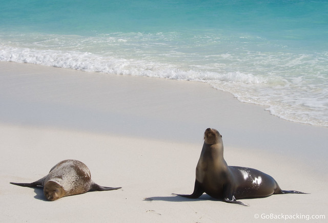 Sea lions on Espanola Island