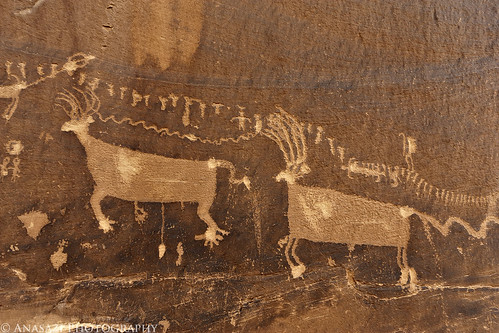 Procession Elk