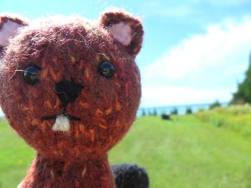 Knit Beaver