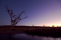 Finke River, Glen Helen, NT, Australia (Explore) (Bass Photography) Tags: sunset tree water australia falcon gumtree peregrine northernterritory finke finkeriver westmacdonnellnationalpark