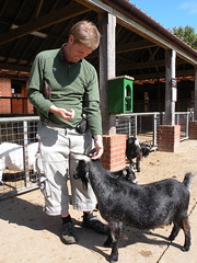 goaty (estherase) Tags: emssimp findleastinteresting 0f kessingland africaalive zoo wildlifepark animals suffolk kessinglandzoo friends friend