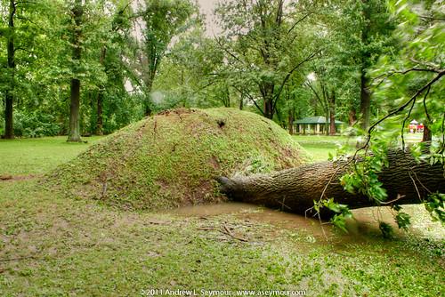 Kerr Park - Fallen Tree - Hurricane Irene