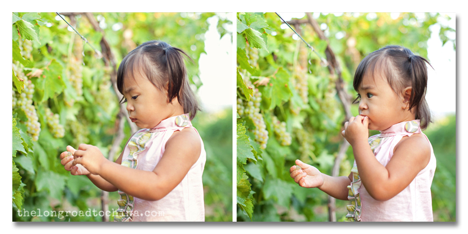 Picking Grapes Collage