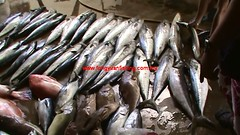 20100737 (fymac@live.com) Tags: mackerel fishing redsnapper shimano pancing angling daiwa tenggiri sarawaktourism sarawakfishing malaysiafishing borneotour malaysiaangling jiggingmaster