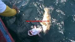 20100806 (fymac@live.com) Tags: mackerel fishing redsnapper shimano pancing angling daiwa tenggiri sarawaktourism sarawakfishing malaysiafishing borneotour malaysiaangling jiggingmaster
