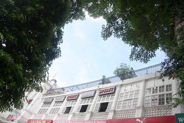 City Nature – Semal Tree, Connaught Place – The Delhi Walla