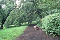 raincoat (Charley Lhasa) Tags: city nyc newyorkcity urban dog ny newyork film rain 35mm rainyday path centralpark manhattan scan raincoat charley cherrytrees lhasaapso nikonos fujicolor lti 28mmf28 fujicolorpro800z nikonosv 800z charleylhasa actionfinder software:adobe=lightroom file:original=jpeg set:name=newnew lwnikkor2828 lwnikkor28mmf28 lw28 lens:nikkor=lw2828 digitalminilab camera:nikon=nikonosv roll:number=v0002 folder:name=3264 image:number=326424a0564 date:uploaded=110908190608 set:name=lti320239 lti:scan=320239 set:name=v0002