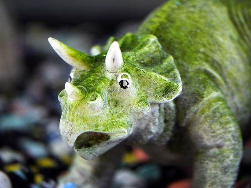 A few useful terms for newbie aquarium owners my for Cloudy fish tank water in established tank