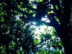 "Entre Ramas (Berly Fuster) Tags: world trees naturaleza sun tree verde green luz sol apple nature backlight contraluz spider eyes plantas arboles earth branches web natur ojos árbol vegetation trunk entre grün araña augen äste tronco sonne ras mundo spinnennetz biodiversity vegetación tierra manzano welt erde planeta stamm 자연 ramas telaraña biodiversidad 세계 나무 눈 웹 식물 태양 녹색 지구 사과 hintergrundbeleuchtung 가지 스파이더 줄기 백라이트 amongplants 나무의눈 augenderbaum eyesoftree 중식물 緑、太陽、自然、、ウェブ、ras、植物、木、木、植物、リンゴ、生物多様性、地球、地球、世界、枝、幹、目、木の目の中でも、バックライト、クモ ""ojosdeárbol"" 생물다양성"