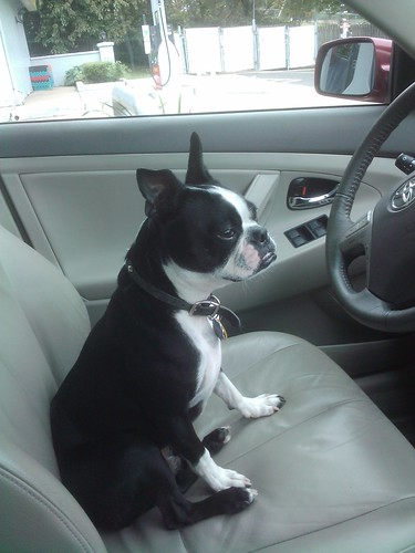 Bandit's ready to drive!