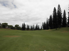 WAIKELE COUNTRY CLUB 229