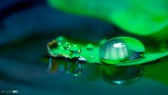 Ominous (Emyan) Tags: blue green water closeup leaf drops focus dof macto canon180mm