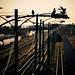 Railway Doves