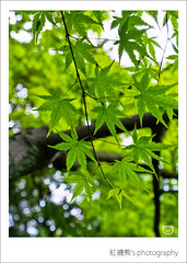 ( ()) Tags: family macro japan maple bokeh olympus zuiko e30  1554