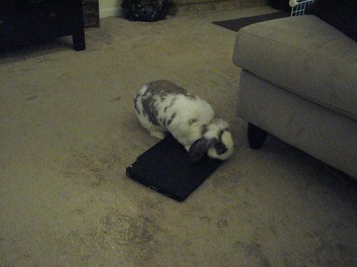 betsy examines laptop