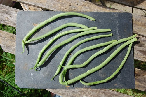 Unknown long bean
