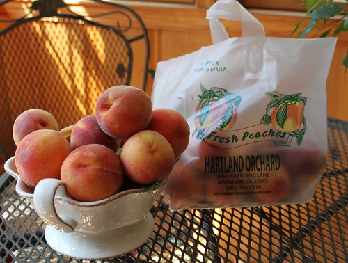 I picked a peck of peaches!