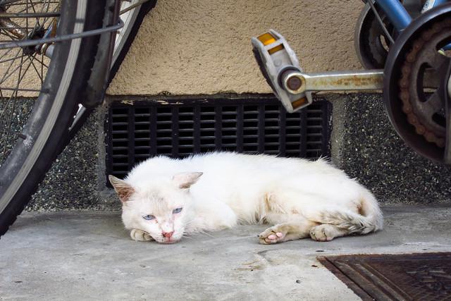 Today's Cat@2011-08-12