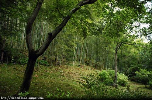 Tenryuji 天龍寺 - Bamboo Grove