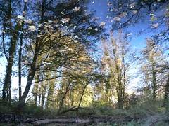 Impression (Michel d'Alissas) Tags: trees light sky leaves ciel arbres lumiere reflets ardeche dgrad rflection supershot bleuciel feuiles