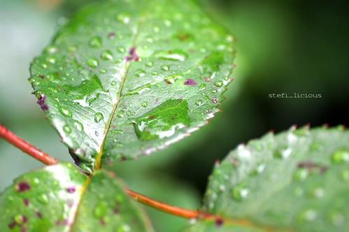 regen_blatt