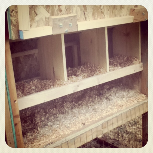 Nesting boxes!