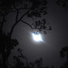 Moon as seen thru my lens