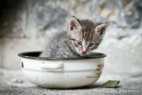 Little ball of fur by dusan.smolnikar