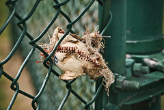 """Crushed it"" (hutchphotography2020) Tags: green fence gate baseball crushed homerun outfield rbi flickraward"