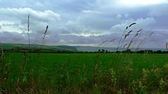View Through Long Grass (eskayfoto) Tags: ocean sea green field grass wales clouds lumix coast meadow panasonic pembrokeshire cloudscape headland lx3
