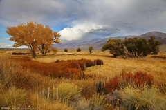 Autumn Tones (DM Weber) Tags: california autumn red orange fall landscape owensvalley cottonwoods rabbitbush eos5dmkii psa148 dmweber