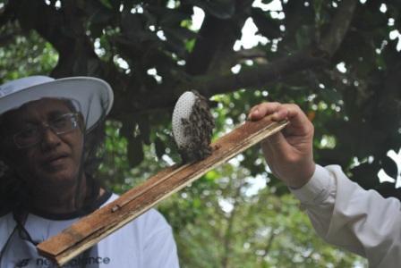 Beekeeping in Malaysia
