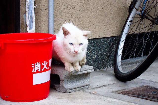 Today's Cat@2011-08-22