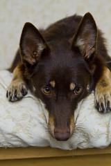 [フリー画像] 動物, 哺乳類, 犬・イヌ, 201108251100