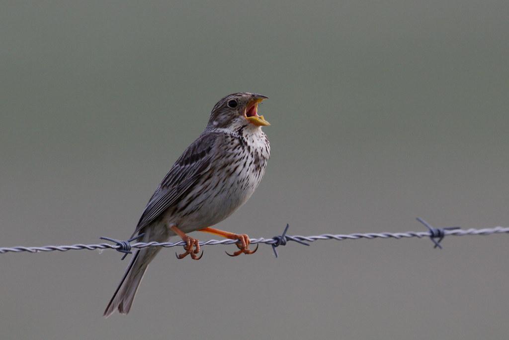 Jumping Genes Reveal Deep Relationships Between Parrots