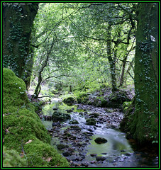 Secret Stream (Haydn (B-J)) Tags: trees water h2o rivers greenery streams dartmoor