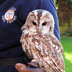Tawny owl (CNorth2) Tags: uk travel autumn england fall rural canon countryside lakedistrict powershot cumbria owl tawny g11 worldowltrust muncastercastle ravenglass worldowlcentre